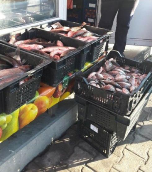 Протягом місяця Тернопільський рибоохоронний патруль вилучив 97 кг водних біоресурсів