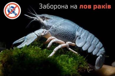 На Тернопільщині заборонено ловити раків